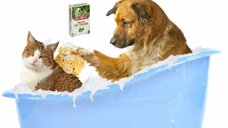 Дегтярное мыло для лечения от блох у животных