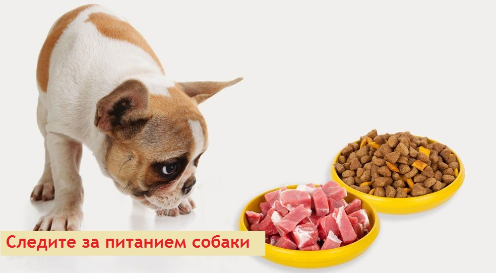 Как вылечить щенка от власоедов