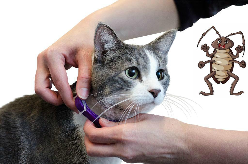 3 вида ошейников от блох для котят. Со скольки месяцев можно одевать?