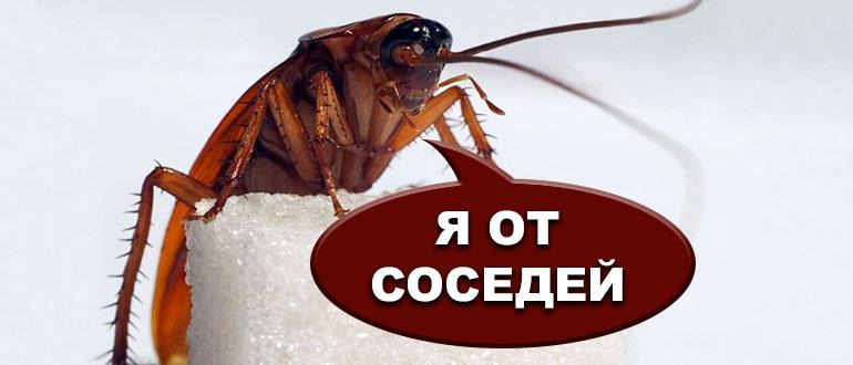 Должно ли жэу травить тараканов