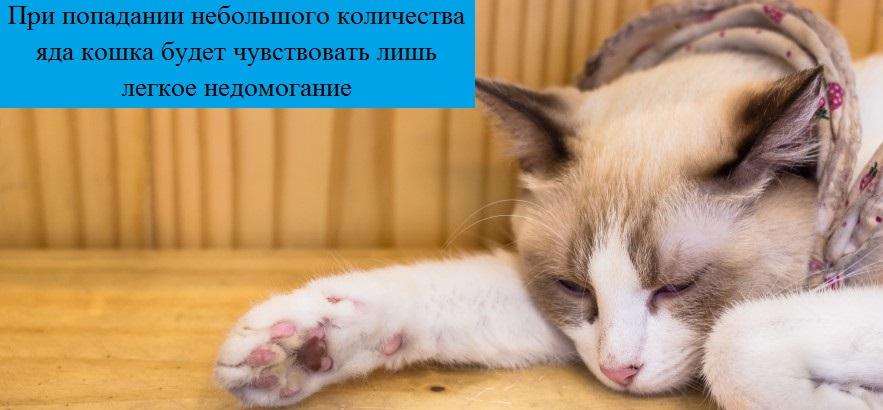 Что будет если кошка слижет капли от блох, отравится кот или нет?