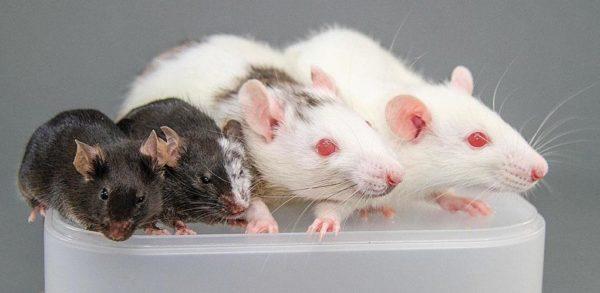 Какой утеплитель не грызут мыши и крысы защита от грызунов при строительстве дома