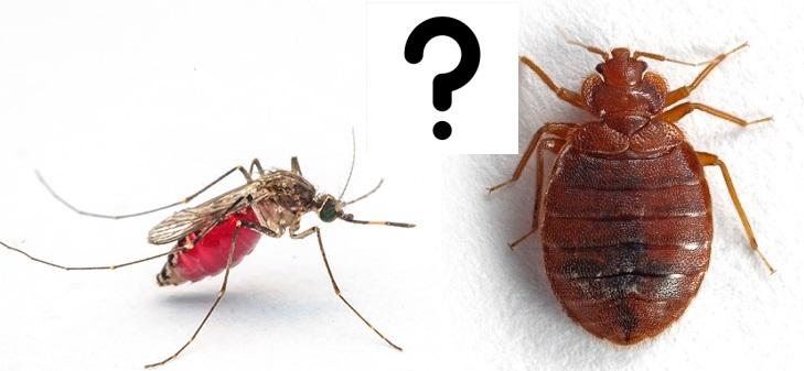 Как отличить укусы клопа от укусов других насекомых. Как отличить укус комара от укуса клопа.