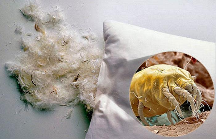 Сыпь от постельных клещей