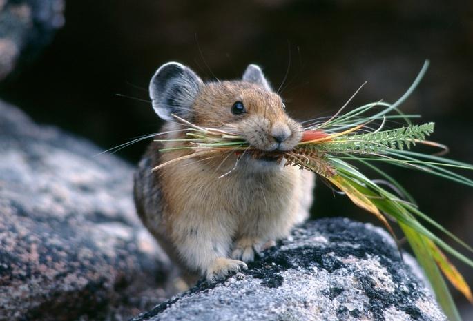 Что едят мыши в природе и в доме? Кто их естественные враги?