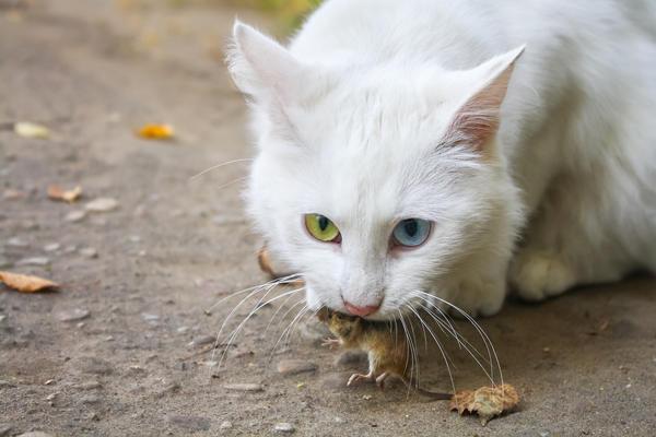 Какие запахи не любят мыши и крысы