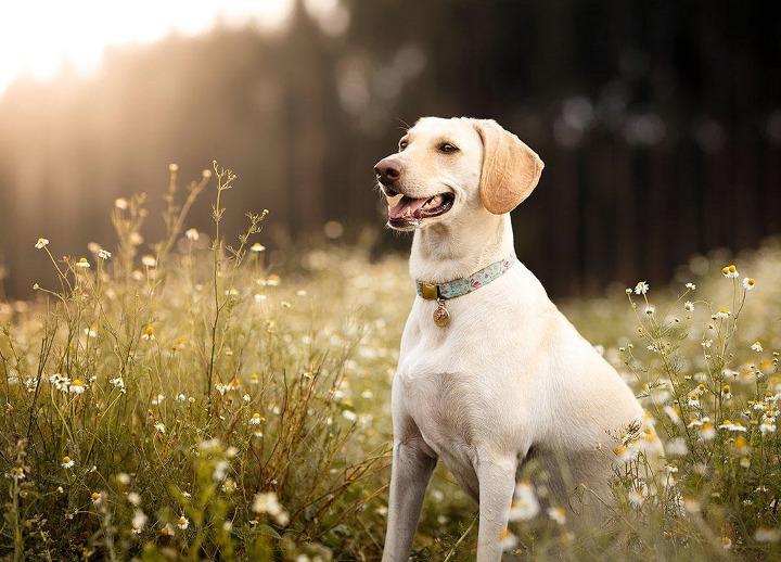 Фронтлайн для собак от клещей – обзор, мнение специалистов. Выбираем и защищаем питомцев правильно