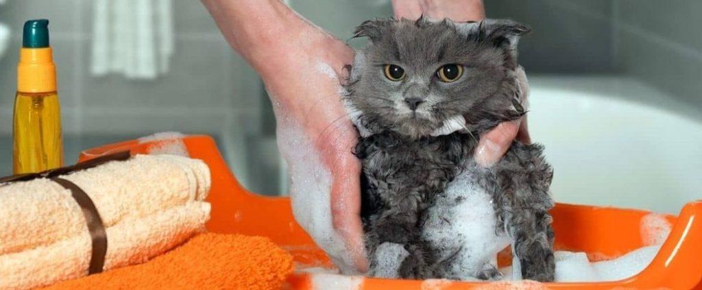 Как вывести блох у кошки (котёнка) в домашних условиях, как выглядят блохи