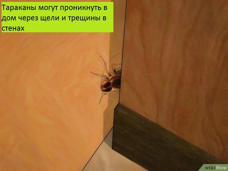 Как избавиться от тараканов: 9 средств для их уничтожения — домашних и покупных