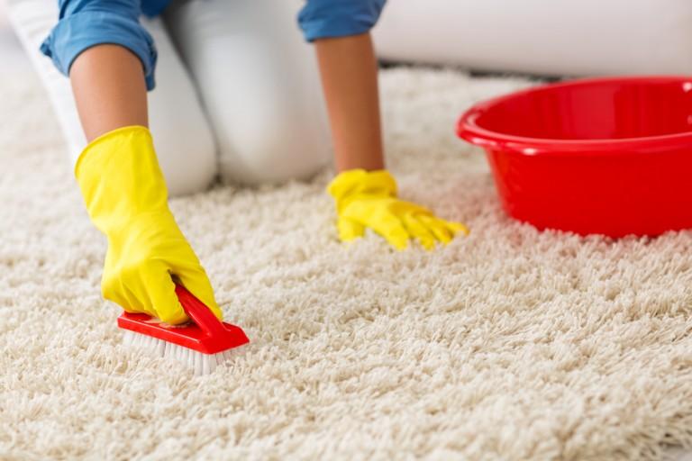 Ковровые блохи - как избавиться в домашних условиях? Чем потом обрабатывать ковёр