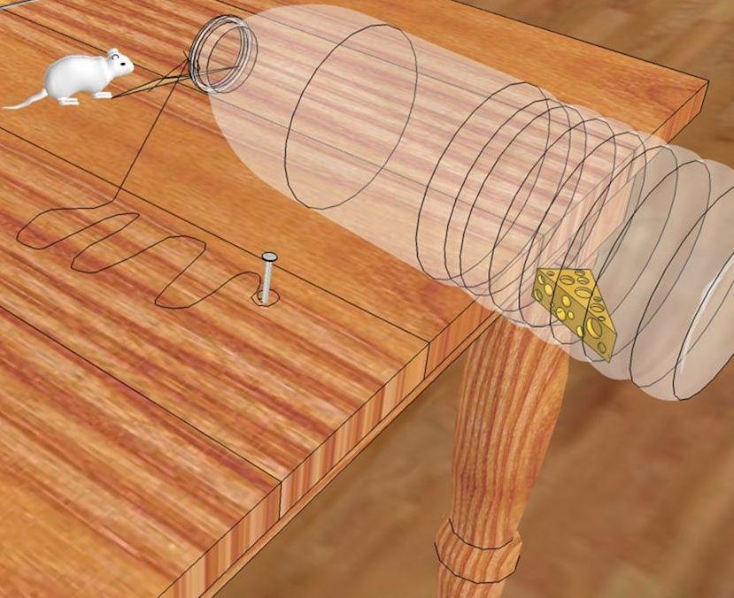 Мышеловки своими руками: эффективные самодельные ловушки, как делать в домашних условиях