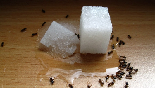 Чёрные муравьи в доме и в квартире, что делать если появились, как избавиться?