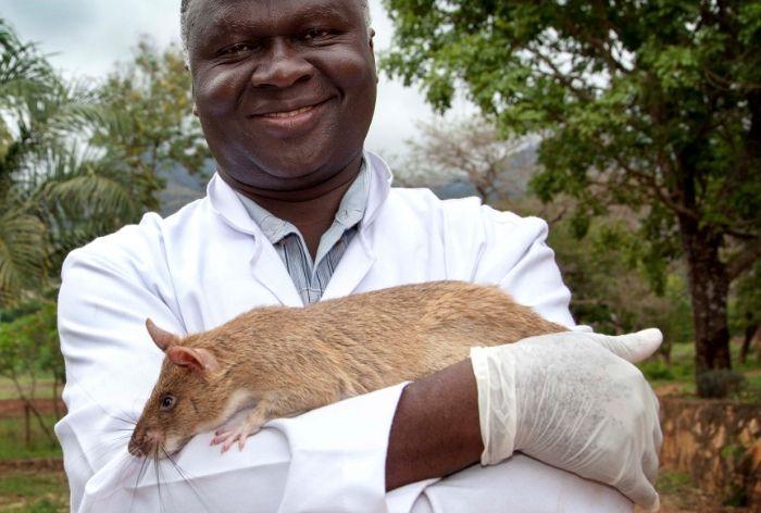 Самая большая крыса