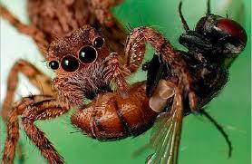 Что едят пауки в дикой природе и чем кормить домашних пауков?